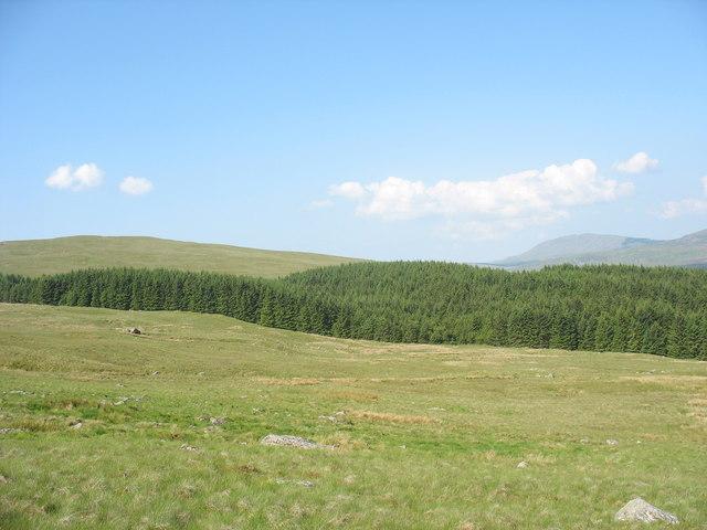 Ffridd Carreg y ceiliog and Gors Lwyd plantation
