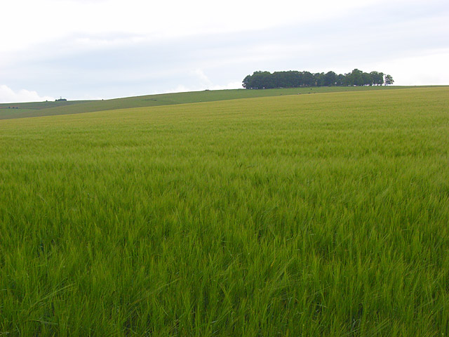 Farmland, Hanging Langford
