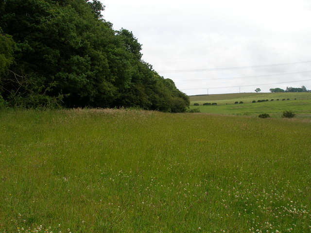 The edge of Coop House Wood