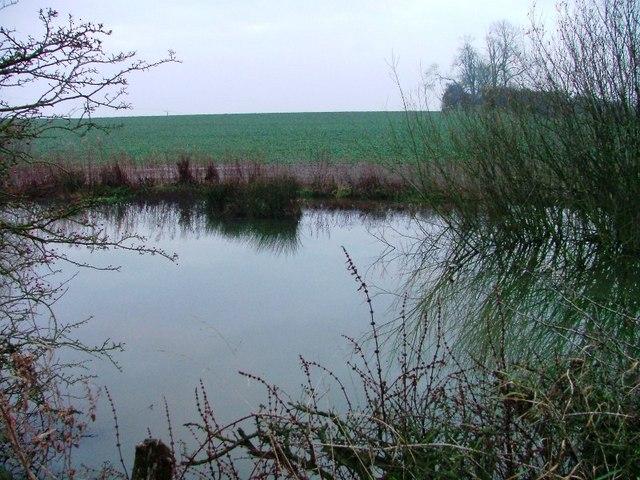 Pond Off Hall Park Road