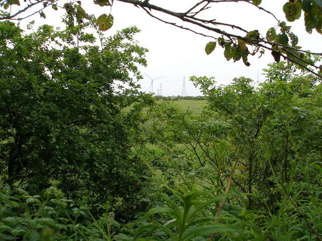 A glimpse of farmland through the trees