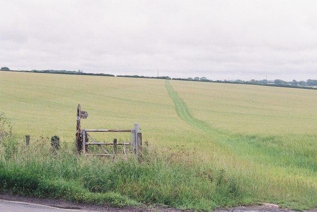 Milborne St. Andrew: bridleway through field