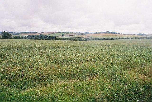 Milborne St. Andrew: looking across the fields