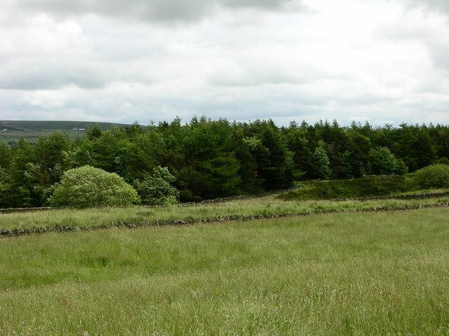 Bank Wood