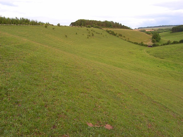 Downland, Steeple Langford