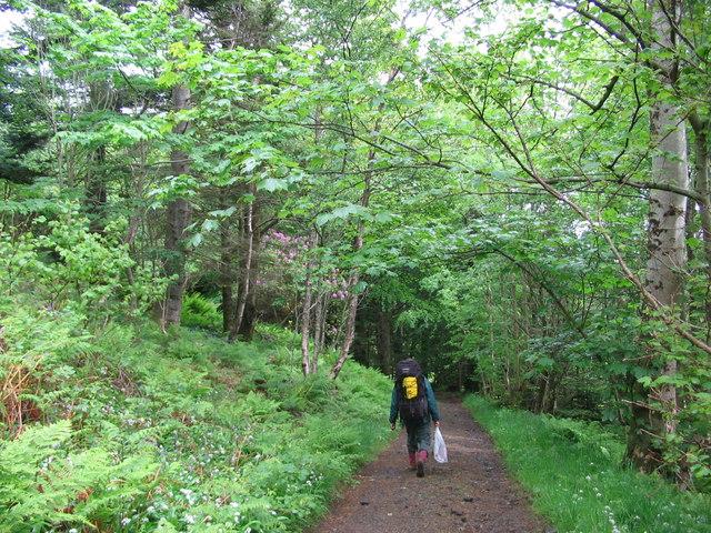 Woodland near Galmisdale