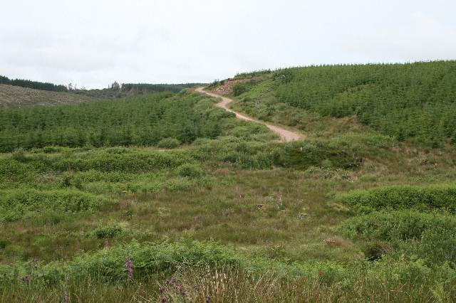 South Kintyre Forestry.