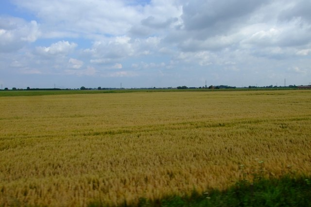 Barley on the turn