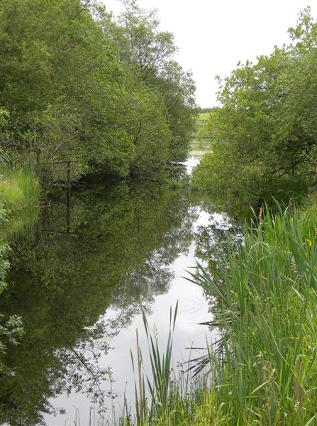 Reflections On The Burn