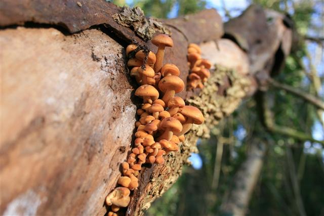 Fungi, Danby Woods