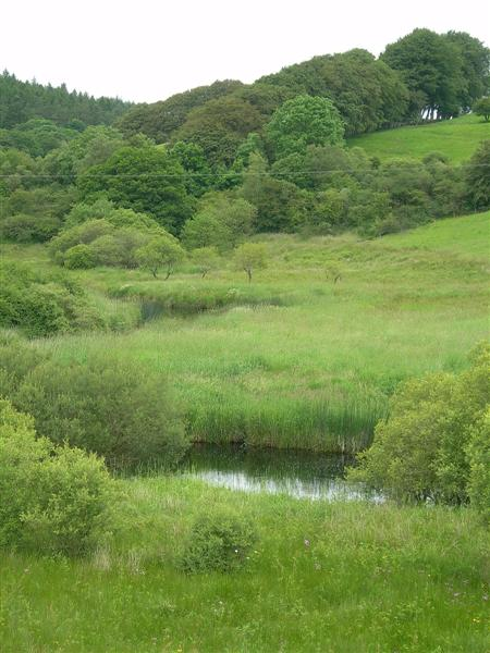 Pool On The Lavery Burn
