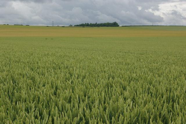 Farmland southeast of Swaffham Bulbeck