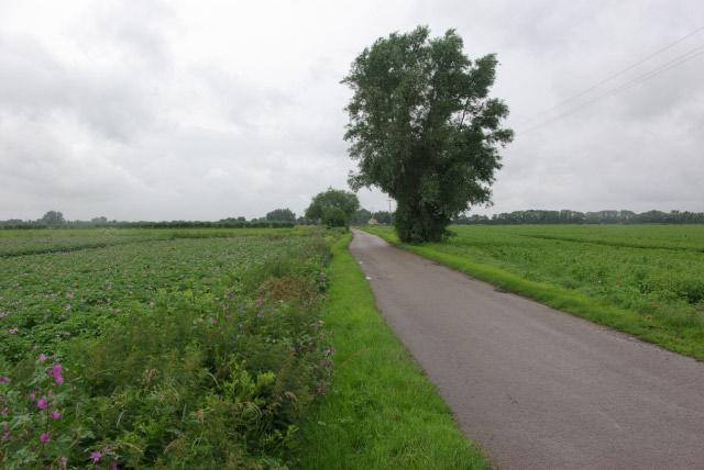 Lane to Lythel's Farm