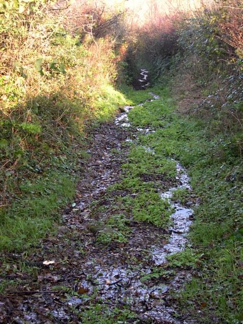 A very damp footpath