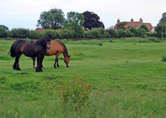 Barlings Hall and horses two