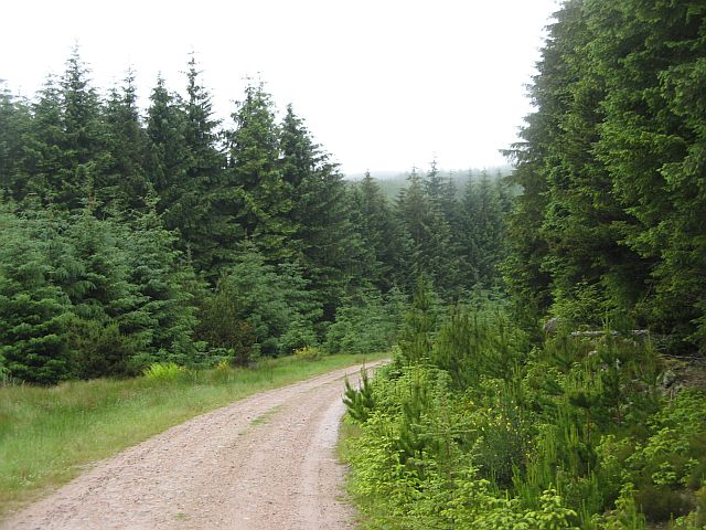Logging road, Durris Forest