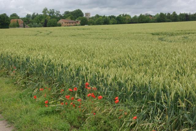 Farmland east of Swaffham Bulbeck