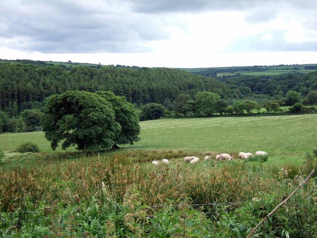 Cwm Syfynwy