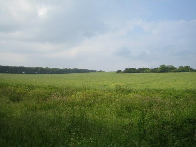 Field near Broughton 1