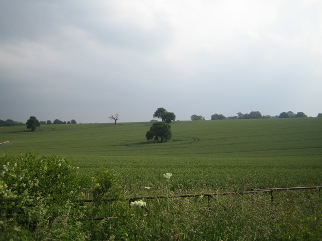 Field near Broughton 2