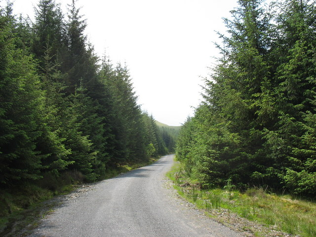 Main forestry road