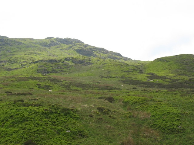 Sheep below Craig y Ffynnon