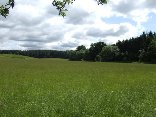 Wheat fields and Washer's Wood