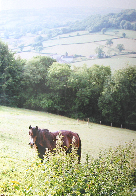 Grazing land near Lemons Hill Farm