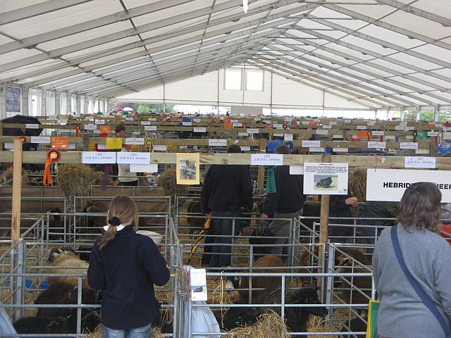 Sheep pens, Royal Highland Show
