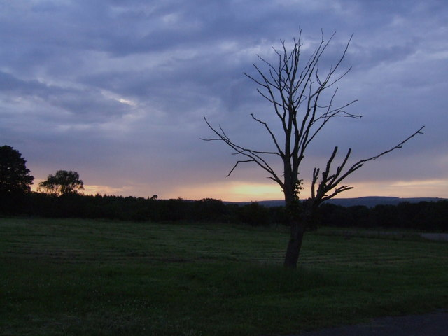 Lone Tree at Shaiba Camp