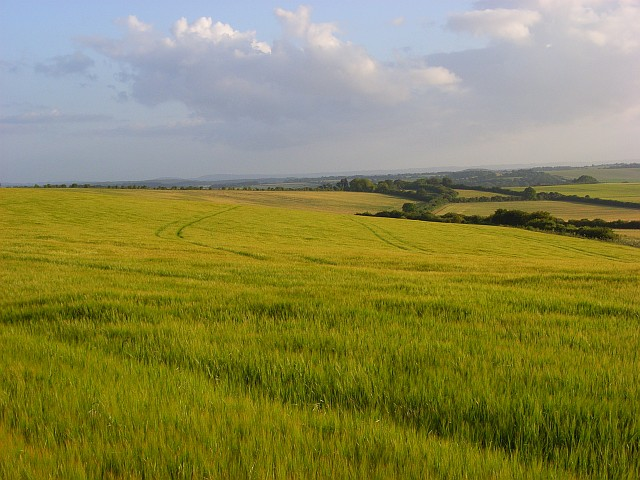 Barley, Aldworth