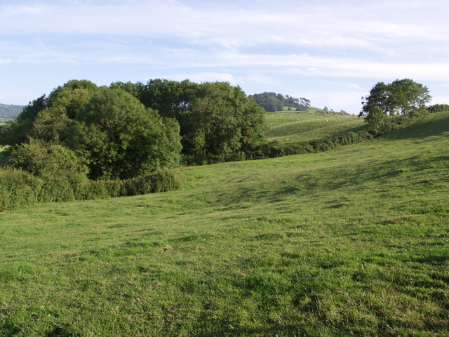 Copse near Abbott's Wootton