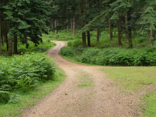 Junction of tracks in Sloden Inclosure, New Forest