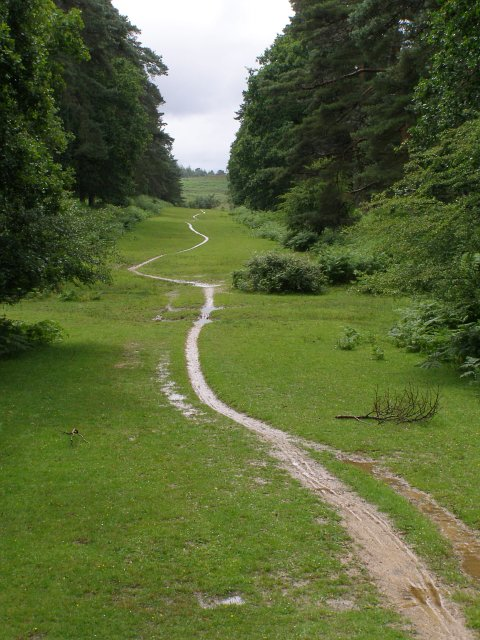 Meandering path along the driftway between Sloden and Alderhill Inclosures,  New Forest