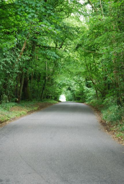 Road through Dinton Beeches