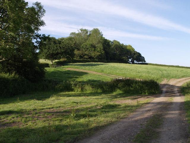 Bridleway near Abbott's Wootton