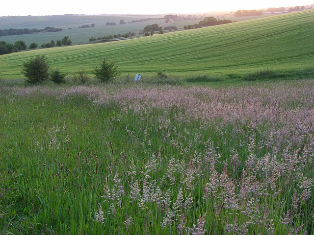 Grassland and barley on the downs at Blewbury