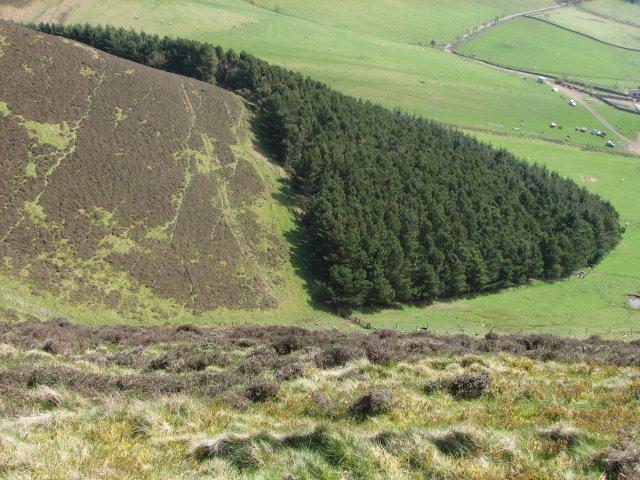 Kips Wood