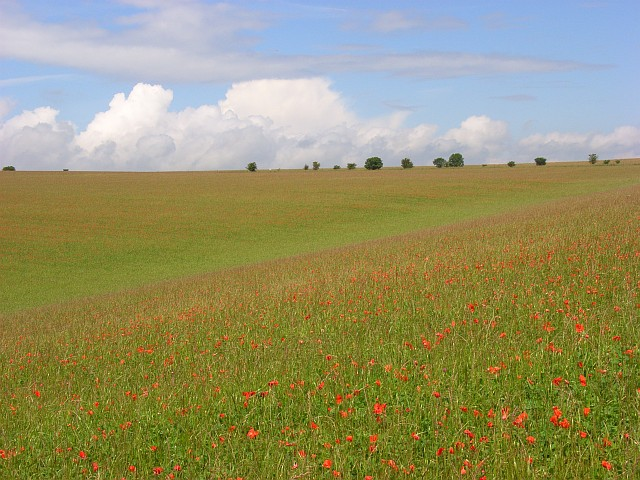 Meadow with poppies, Deptford