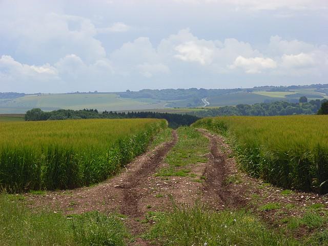Track in barley, Deptford