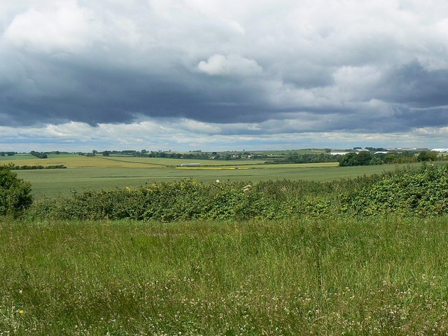Field margin, near Hackpen Hill
