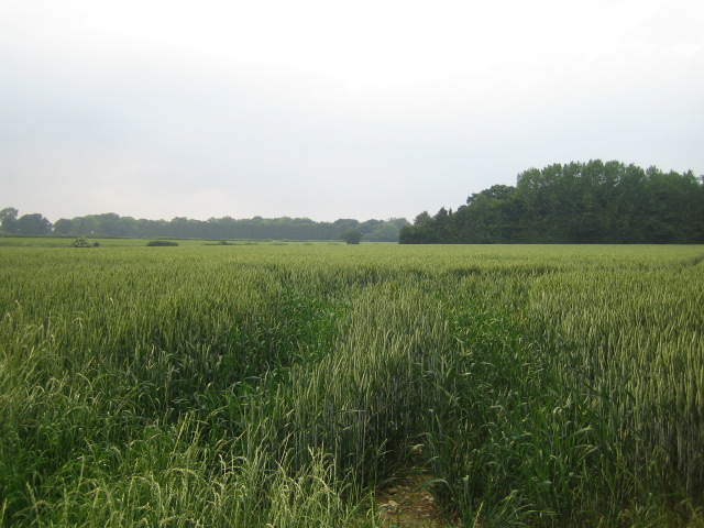 Field near East Tytherley