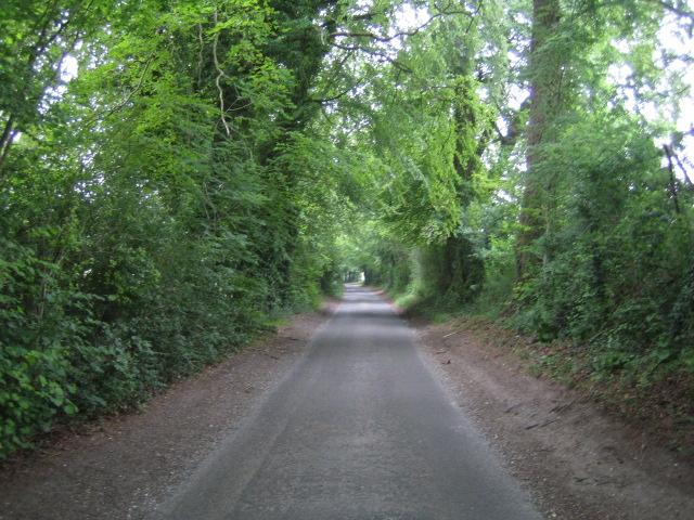 The Warren near Little Buckholt Farm, Buckholt
