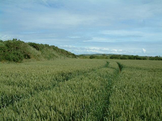 Farmland, Brawdy, Pembrokeshire