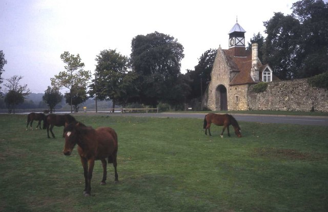 Horses on common land near Beaulieu mill pond