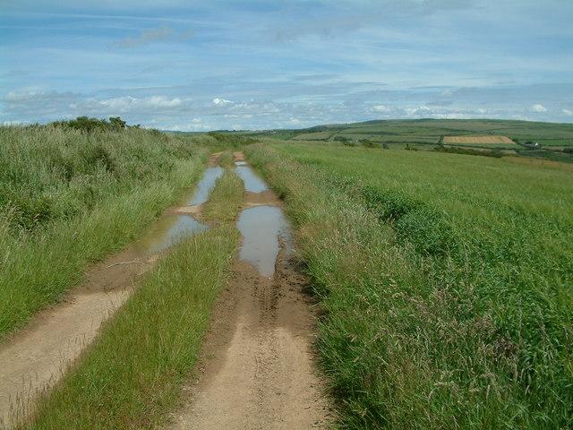 Farm track, Nr. Penycwm, Pembrokeshire