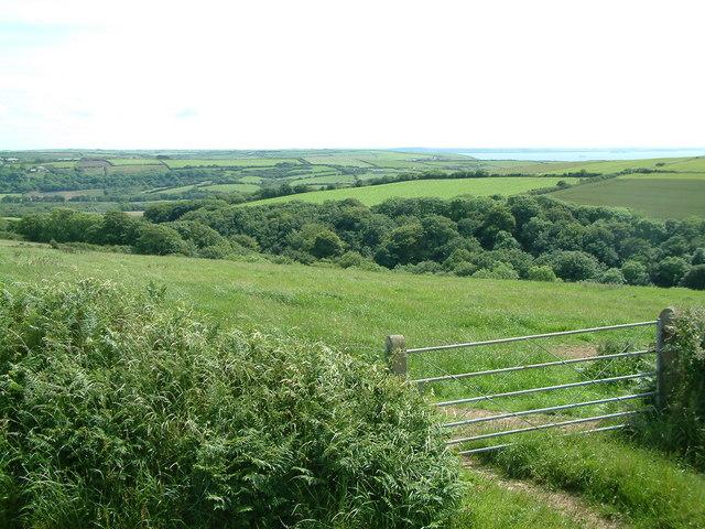 Woodland at Crow Cwm, Penycwm, Pembrokeshire