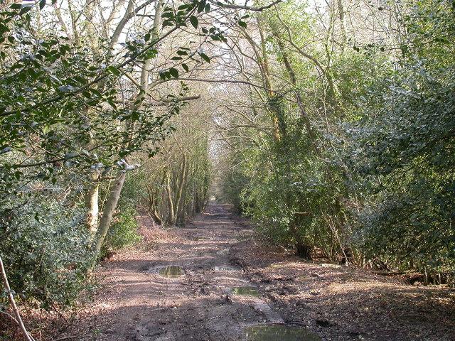 Roman Road Chilworth - April