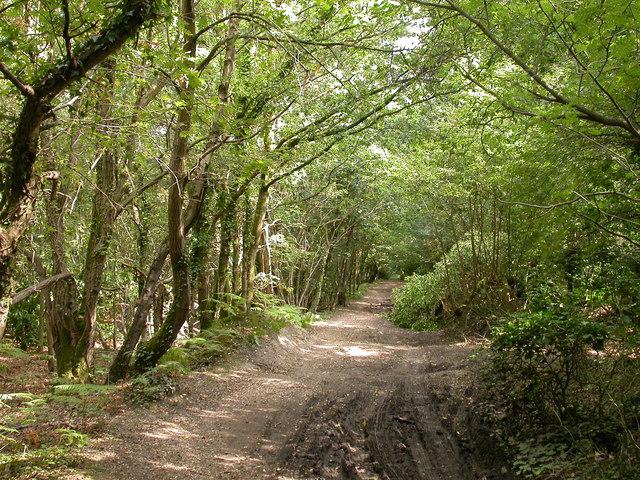 Roman Road Chilworth - September