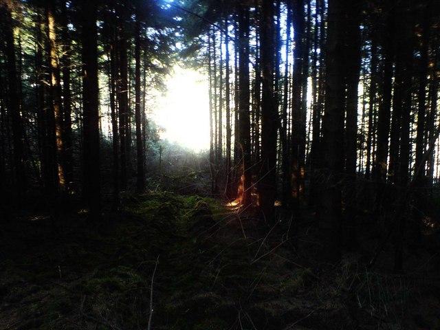 Garnwen Forest